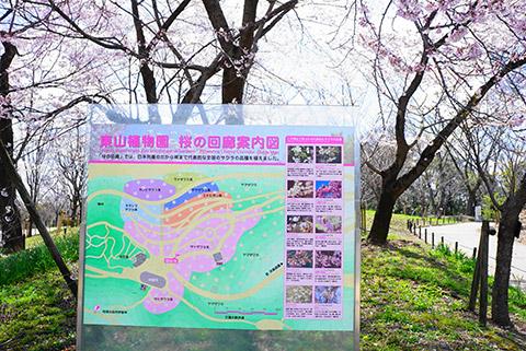 桜の回廊案内図