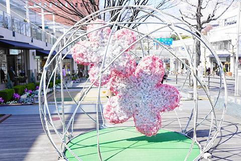 星ヶ丘テラスの桜
