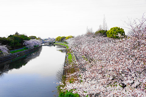 名古屋市港区の荒子川公園