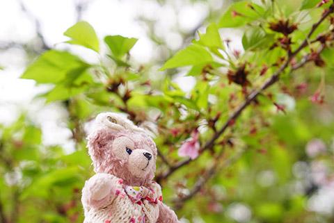 葉桜と記念撮影のマイシェリーメイ