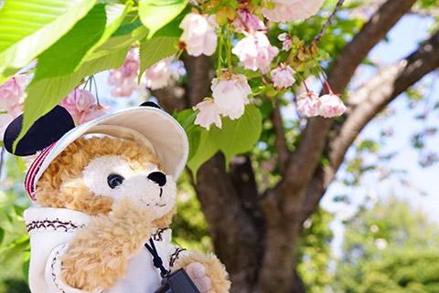4月の終わりの桜
