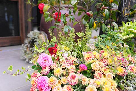 ラクレマの店先のかわいい花