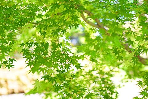 緑がきれいで心地良い朝