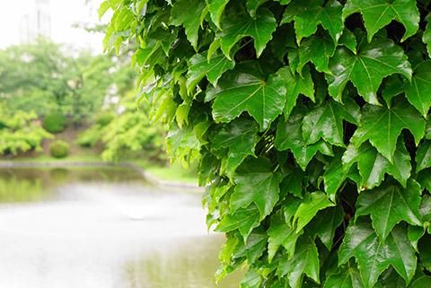 龍城堀のきれいな緑
