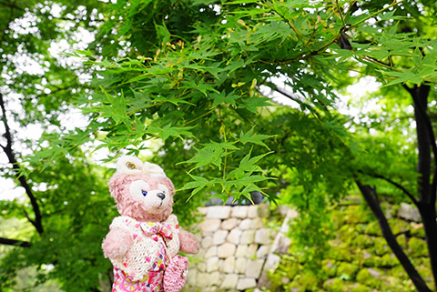 岡崎公園内のきれいな緑の中で記念撮影