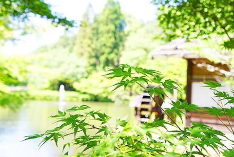 緑がキレイなここちよい空間