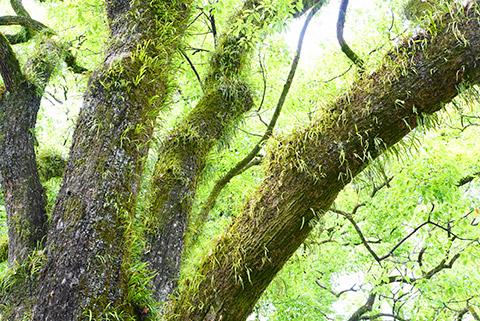 熱田神宮の木