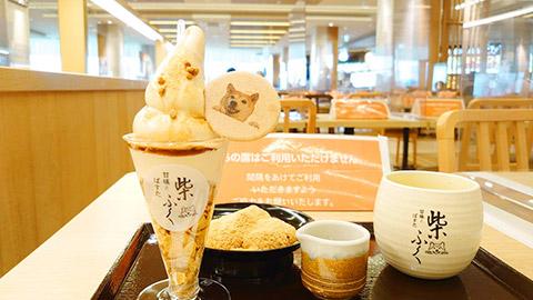 ららぽーと名古屋アクルスの甘味とぱすた「柴ふく」のきな粉ソフトクリーム