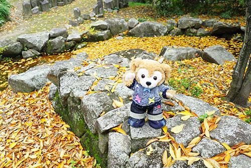 名古屋市港区の荒子川公園の落葉