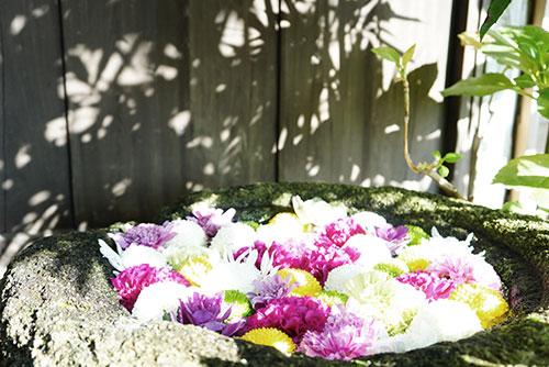 岡崎の菅生神社の花手水