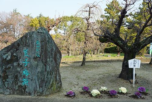荒子公園の梅