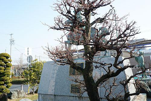 荒子駅前の利家像の前に植えてある梅の木