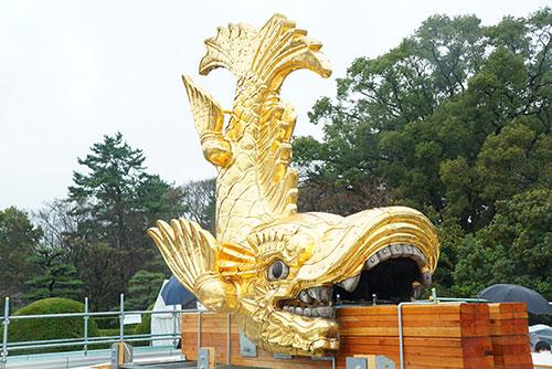 地上に降りた名古屋城の金シャチ