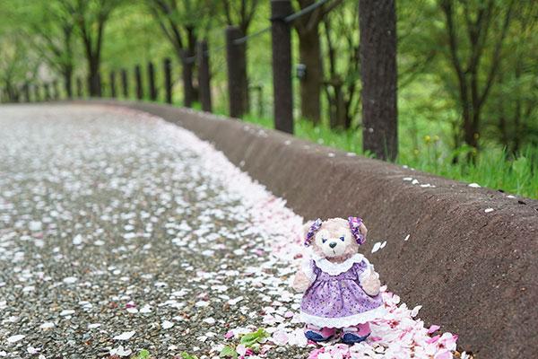 東山植物園にてマシェリーメイを撮影