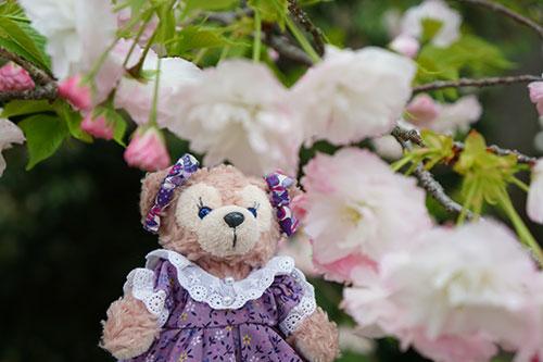 桜咲く東山植物園でマイシェリーメイ撮影