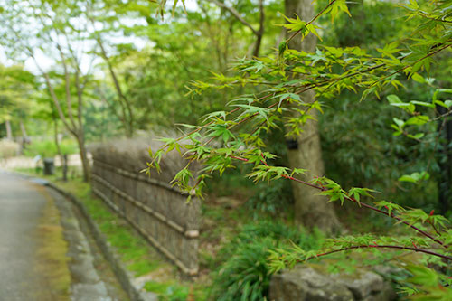 緑がきれいでここちよい東山植物園