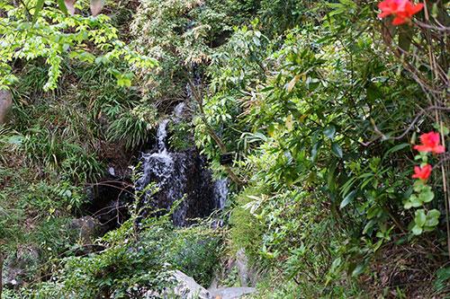 東山植物園の小さな滝