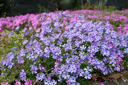 東山植物園のかわいい春の花