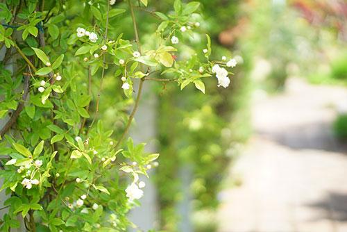自然光と緑の美しさ