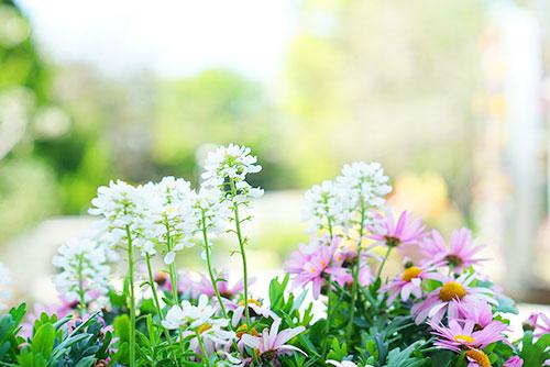 かわいい春の花