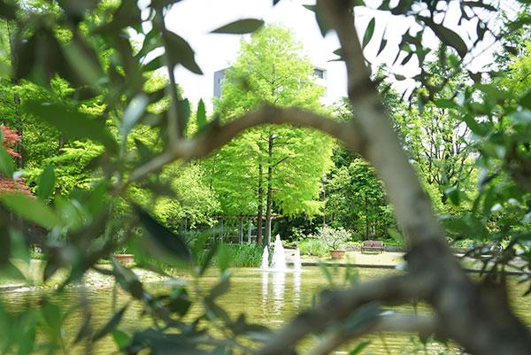 木の向こうに見えるのは、ウォーターガーデン