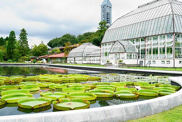 東山植物園no