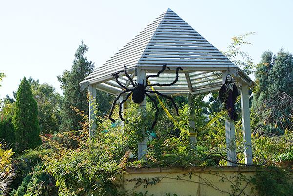大きなクモがいたり