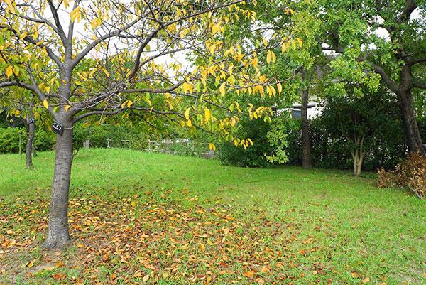 戸田川緑地の秋の風景