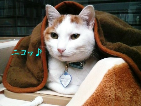 f:id:kumanekodou:20081226183134j:image