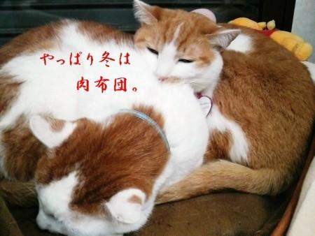 f:id:kumanekodou:20081226184041j:image