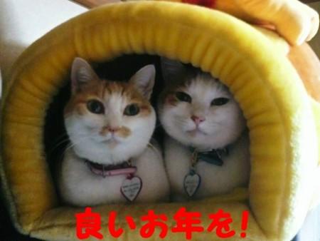 f:id:kumanekodou:20081231233819j:image