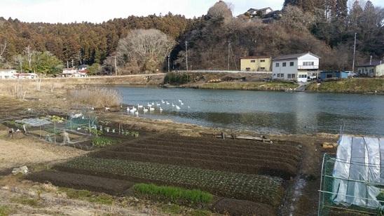 f:id:kumanekozoku-kesennuma27:20170515130711j:plain