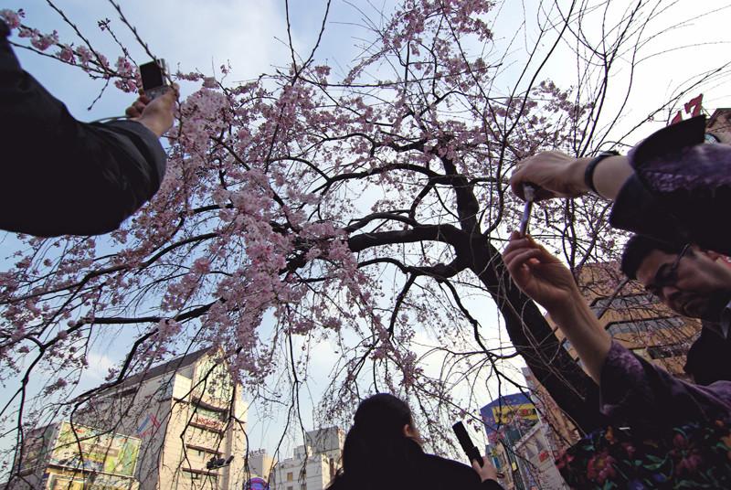 花を撮る人