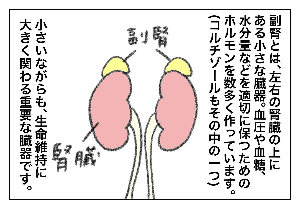 f:id:kumasukumasu:20190819123923j:plain
