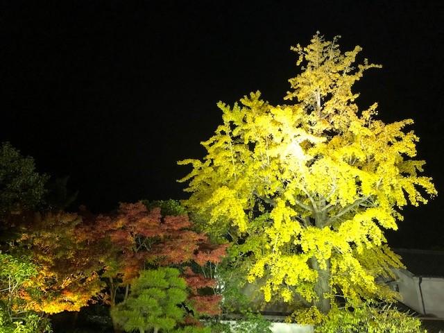 f:id:kumato117:20181130010957j:plain