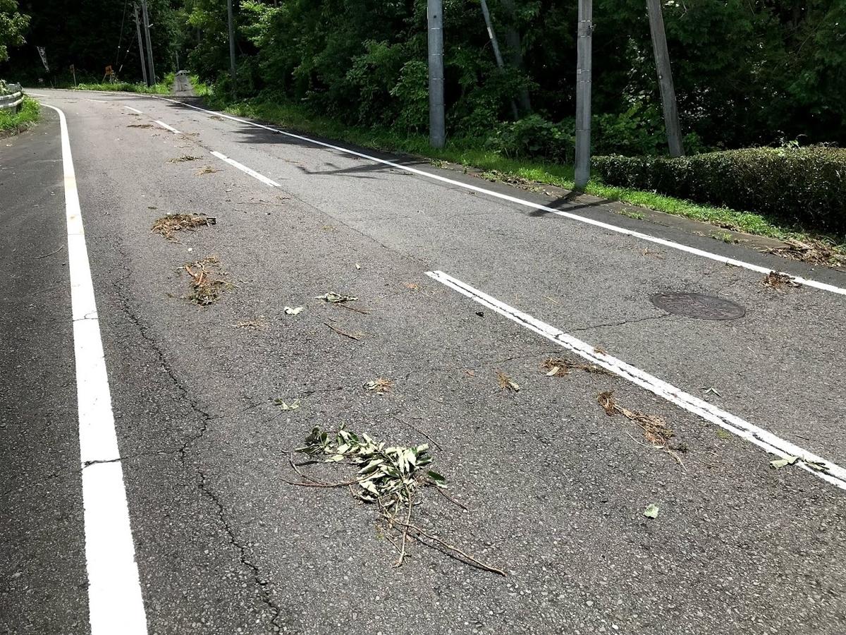 木が落ちている道路