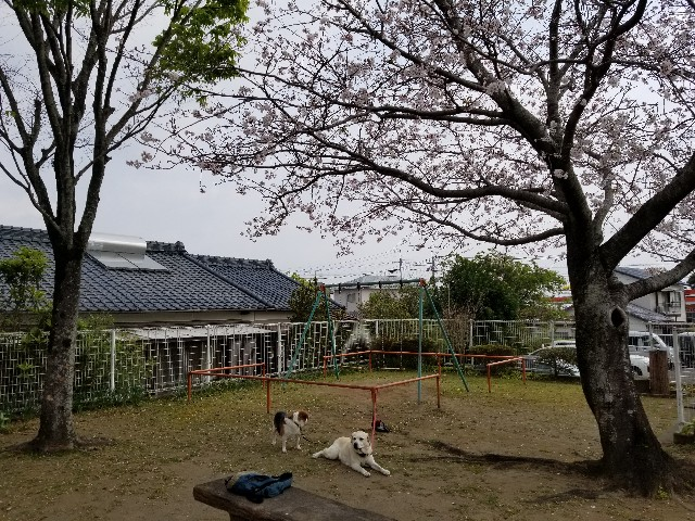 f:id:kume-chan:20210328185911j:image