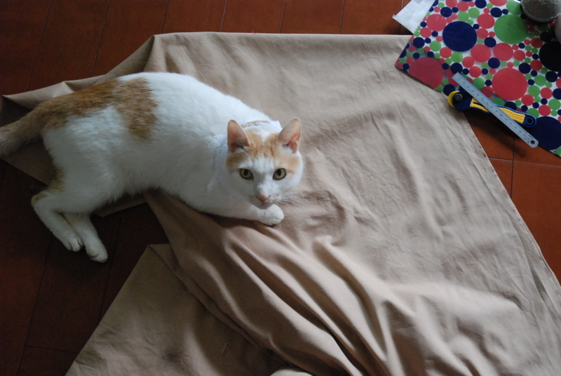 f:id:kumichin_2010:20111019135627j:image:w360