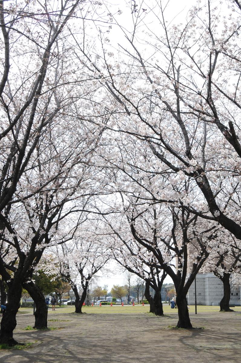 f:id:kumowasukidesuka:20210327172054j:plain