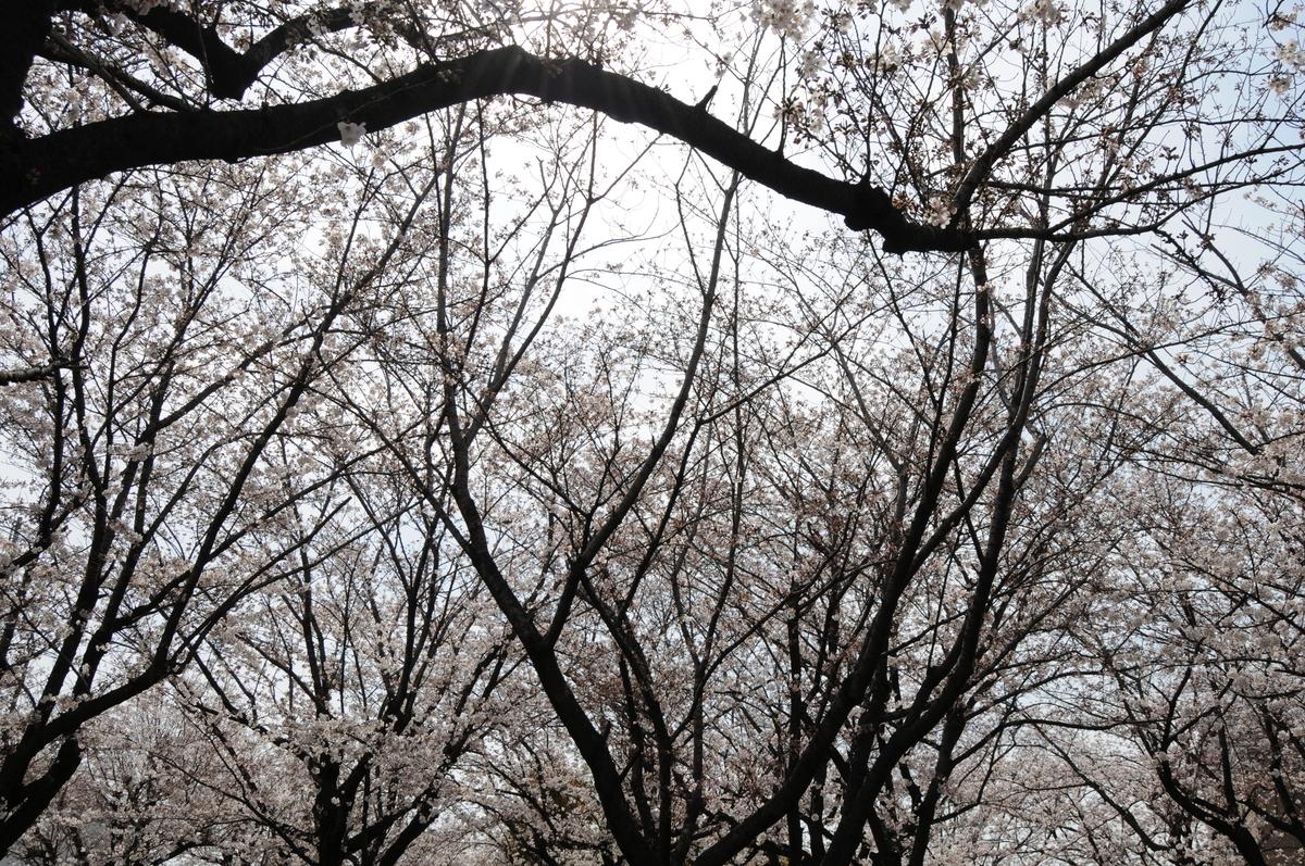 f:id:kumowasukidesuka:20210327172648j:plain