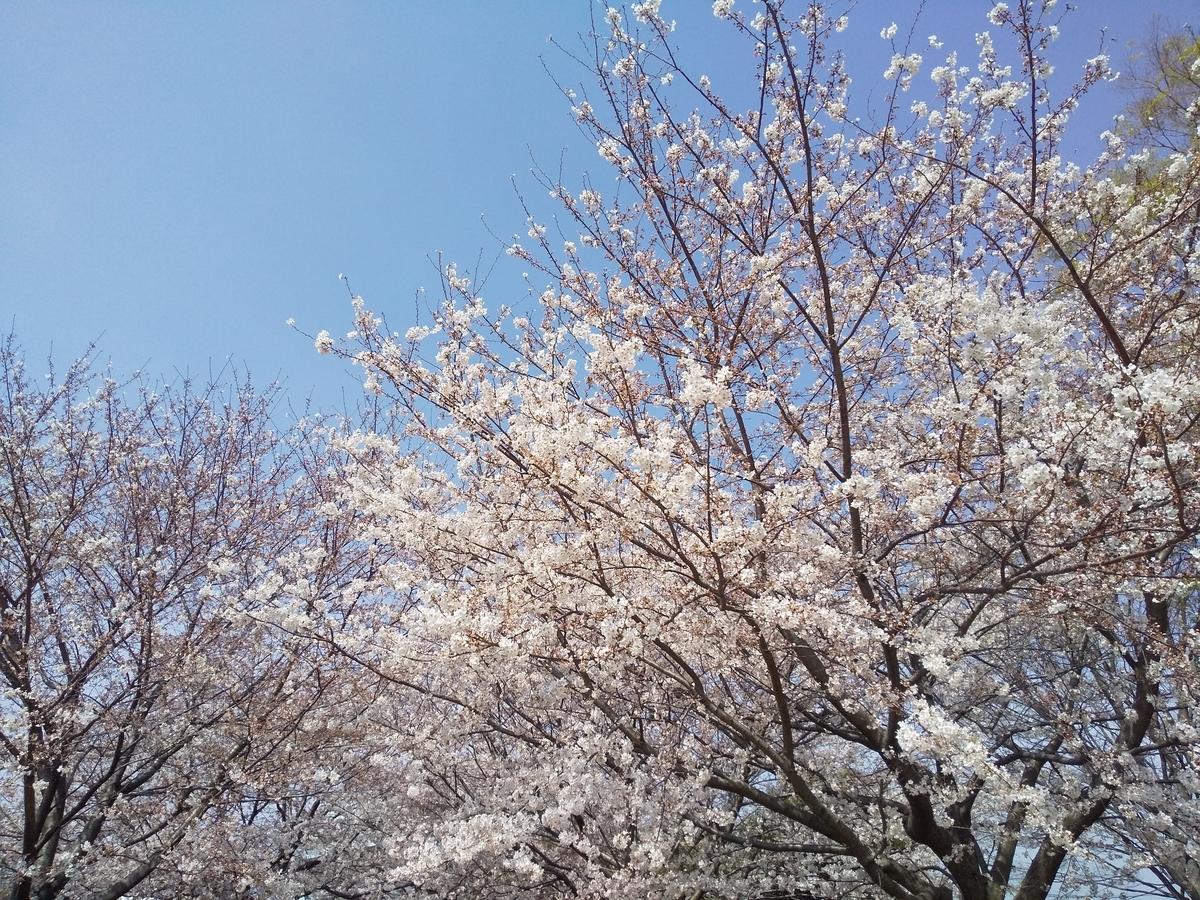 f:id:kumowasukidesuka:20210328112147j:plain