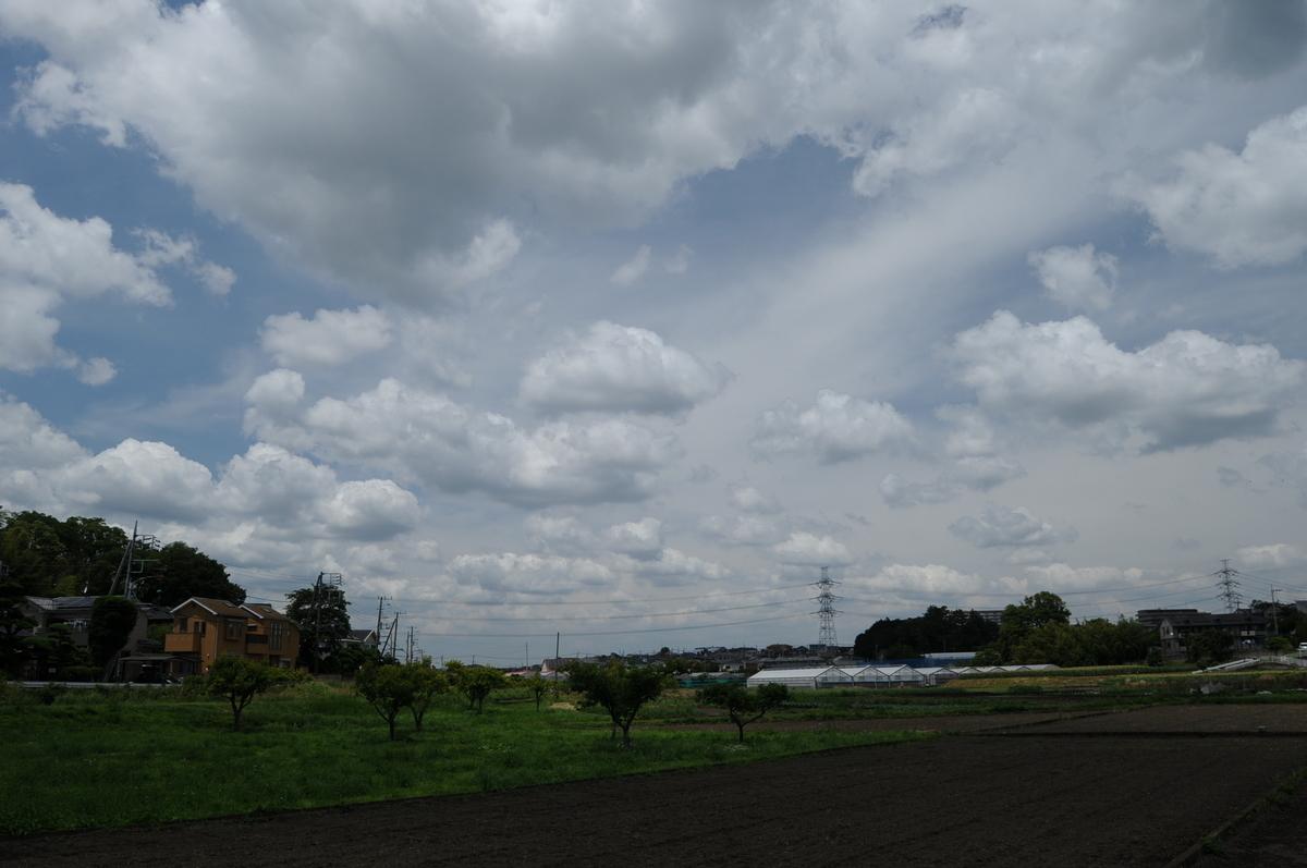 f:id:kumowasukidesuka:20210607205545j:plain