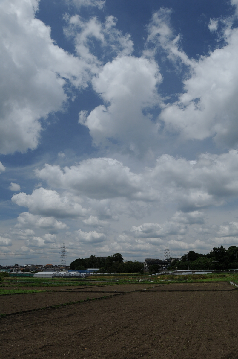 f:id:kumowasukidesuka:20210607210007j:plain