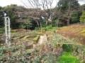 [うみねこ]旧古河庭園8