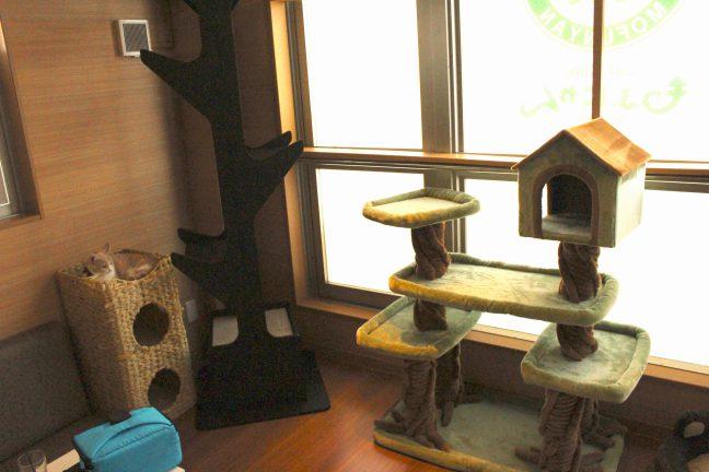 猫カフェもふにゃん内観2