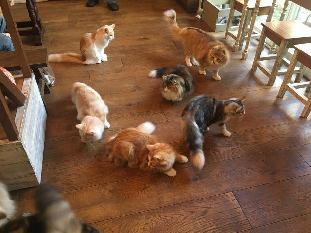 猫カフェRIENの猫たち