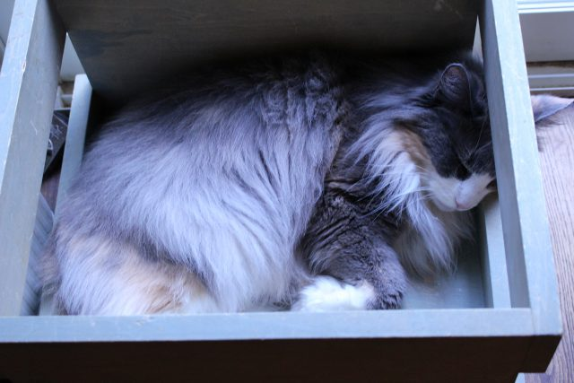 箱の中でお昼寝する猫
