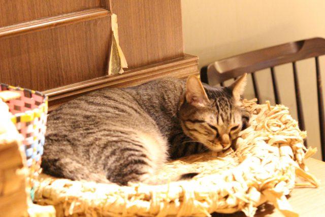 猫カフェきゃらくの猫3