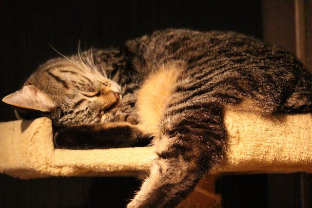 猫カフェきゃらくの猫2