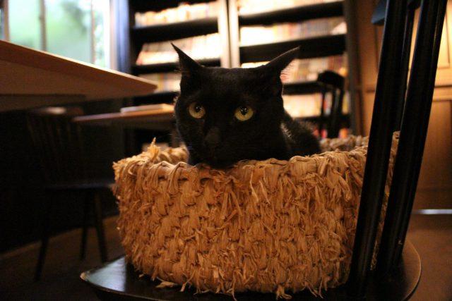 猫カフェきゃらくの猫6